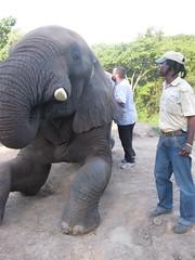 Elephant Brushing