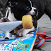 Skater Dog Chews Wheel by CapturingTime Photography