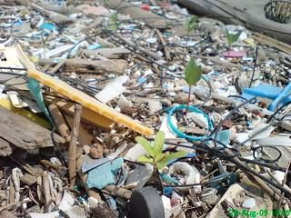 由海浪打上來的垃圾與植物種子,在垃圾堆中許多種子已經發芽。