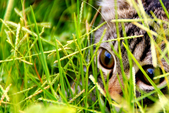 hiding, pre-attacking!!