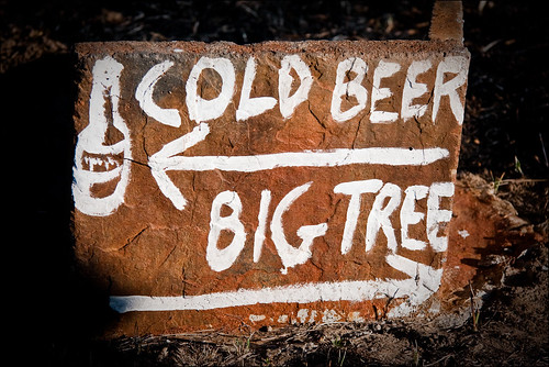 Cold beer, big tree