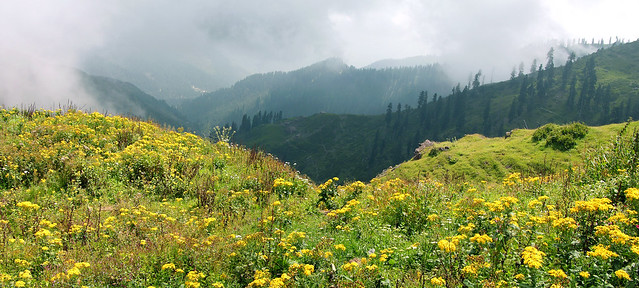 Flowery Meadows of Haji Pir