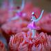 Cupcakes: Ballerina
