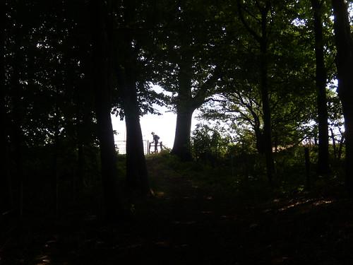 Through a wood