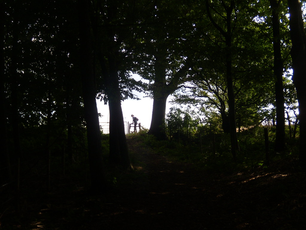 Through a wood Lenham to Charing