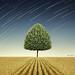 Newton's Apple Tree by Ben Heine
