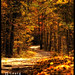 Autumn's Golden Road by Craig - S