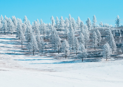 winter nikon mongolia tov vob batsumber goznaraw