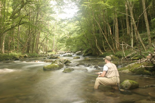 Jay fradd fly fishing the little river in the smoky for Fly fishing smoky mountains