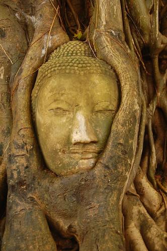 Buddha Head Tree Ayutthaya Thailand