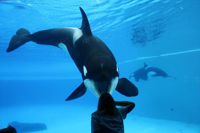 [Photos] Orques aux vitres - Page 2 3763688944_ecebe9042f_z