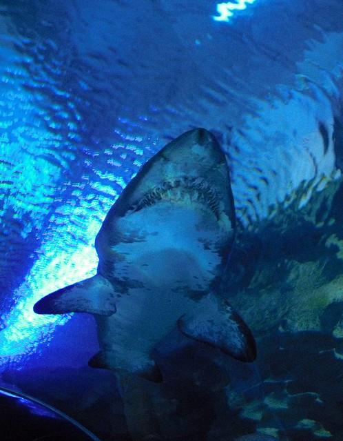 Aquaria KLCC Flickr - Photo Sharing!