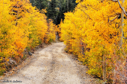 Aspen Path - Colorado
