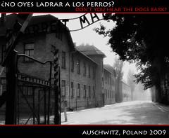 Auschwitz • Birkenau