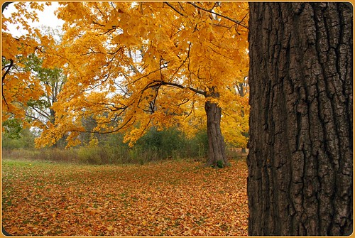 autumn ontario canada fall leaves londonontario