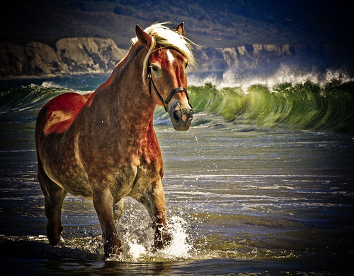 Beautiful Horse Strolling in the waves along the beach