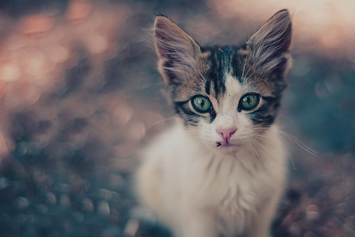 kitty-22