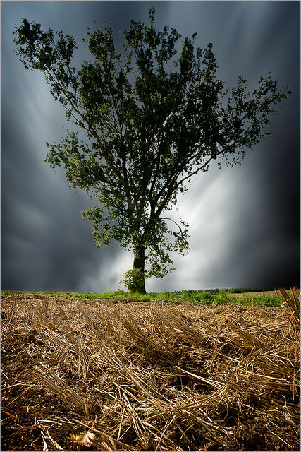 SINGLE TREE I