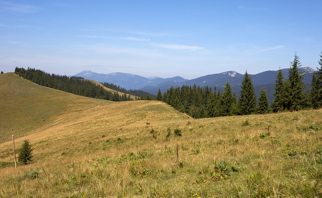 Carpathian mountains. Ukraine