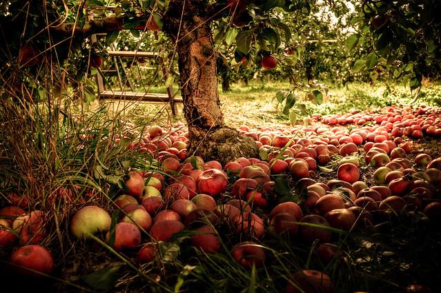 apple tree apple red英文儿歌 apple tree的复数