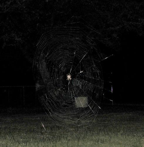 night insect spider us texas web yoakum