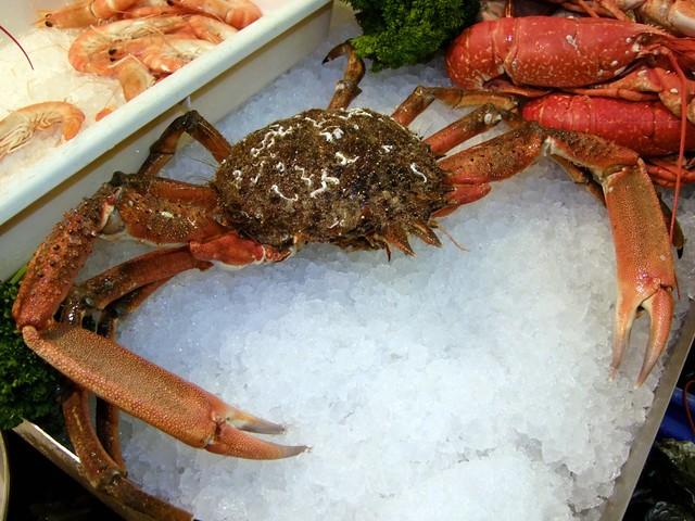 Spider Crab Size Jersey Journey ...