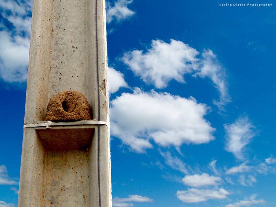 Rufous Hornero Nest