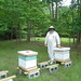 Beekeeping at the Center