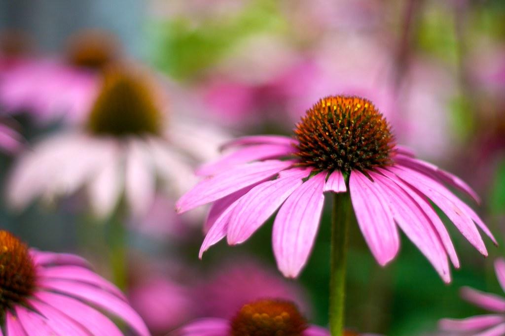 Late Summer Flowers Found Drama