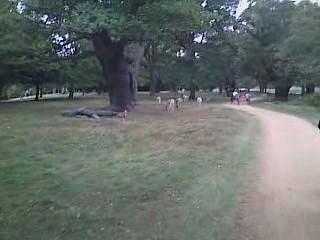 animal videos