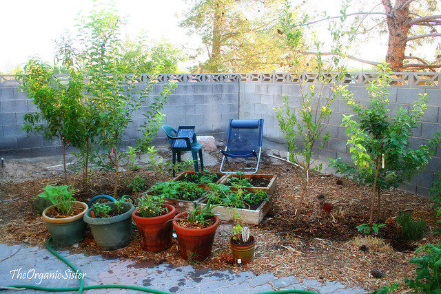 backyard orchard culture flickr photo sharing