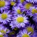 Flowers by Mlguele