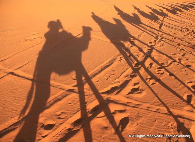 Camel Ride - Erg Chebbi Dunes - Sahara Desert - Morocco