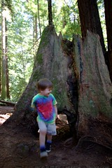 walking in the humboldt redwoods    MG 1148