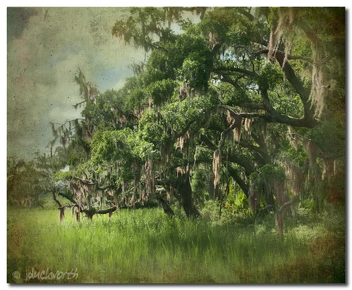 moss bravo lowlands southcarolina spanishmoss marsh hiltonhead jimduckworth jamesduckworth jamesduckworthphotography