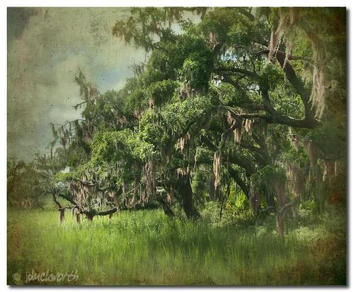 moss bravo lowlands southcarolina spanishmoss marsh hiltonhead jimduckworth jamesduckworth jamesduckworthphotography