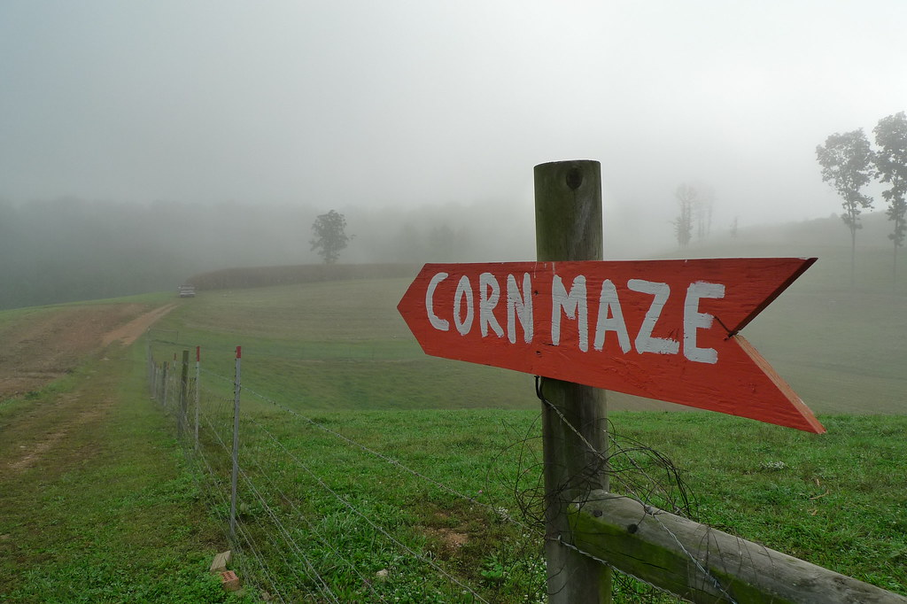 Corn maze in foggy morning