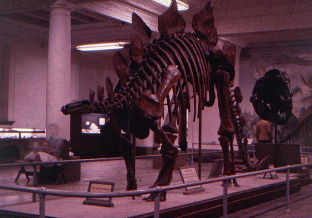 Denver Natural History Museum Jobs