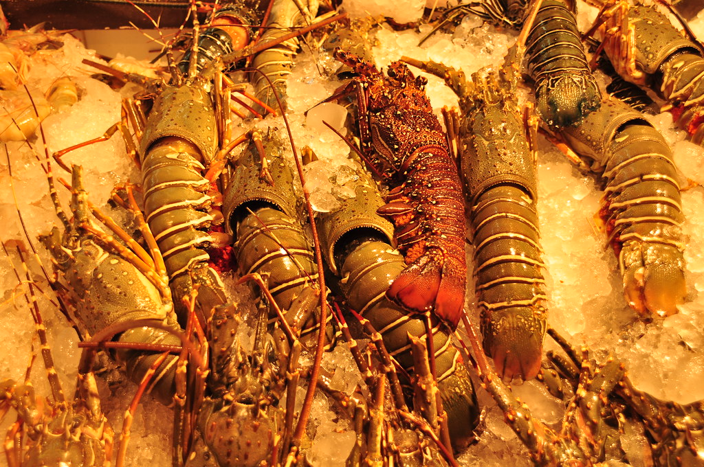 Choose your dinner - lobsters