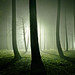 The Secret Life of Trees III
