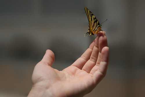 Butterfly that landed on her fingers