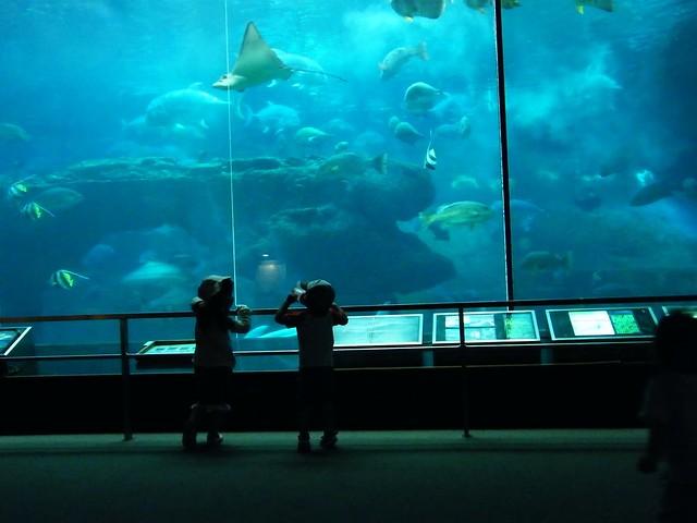 Aquarium at Minami Chita Beachland