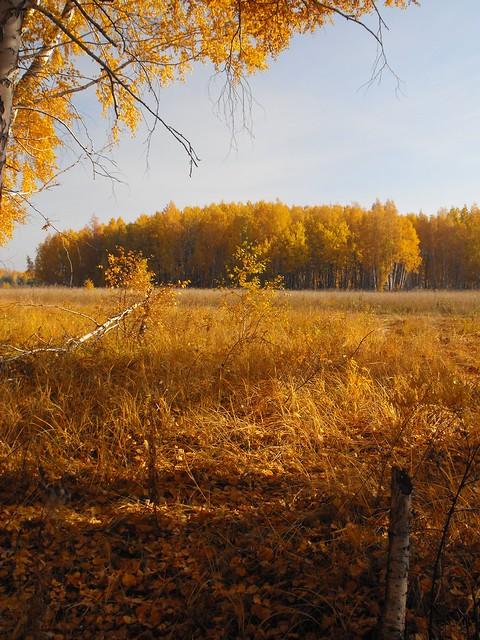 Golden Autumn in Siberia