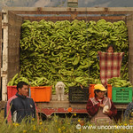 Bananas, Anyone? Saquisili, Ecuador