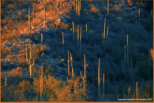 arizona tucson ventanacanyon nikond90