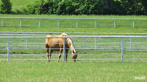 Horse enjoying Paddock