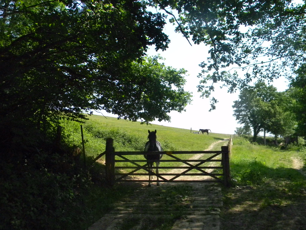 Horse and gate Wadhurst Circular