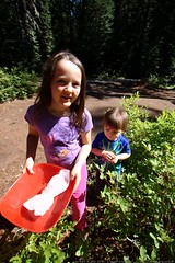 teagan and sequoia picking huckleberries at our camp…