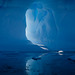Antarctica_2009-LXXVIII