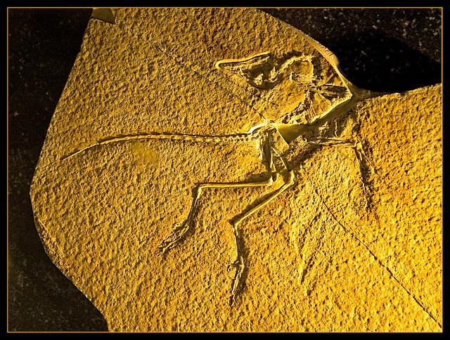 Archaeopteryx - Eichstätt Exemplar